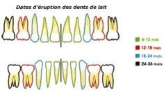 Comment est constituée la bouche d'un enfant 2